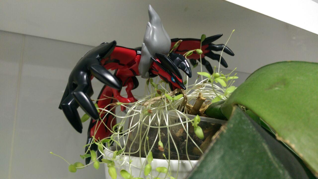 Yveltal comiendo una planta